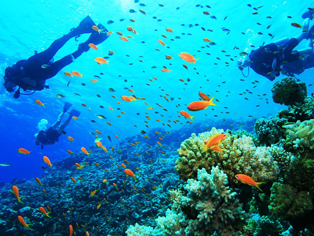 A la découverte des fonds marins colorés de l'île