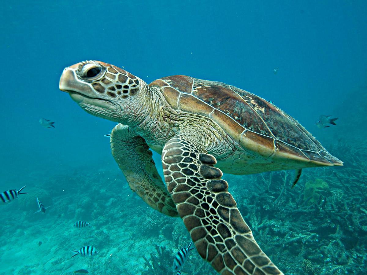 Rencontrez les tortues lors d'une plongée