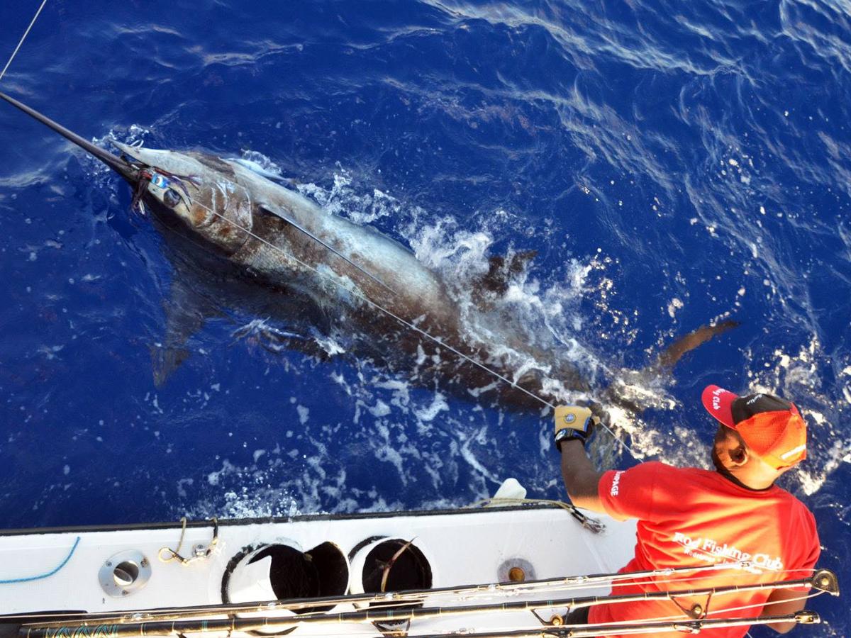 Prise d'un Marlin bleu de 200 kg