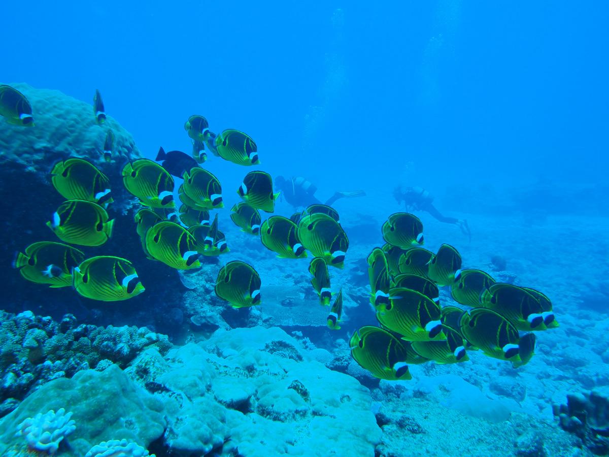 Découverte des fonds marins en plongée
