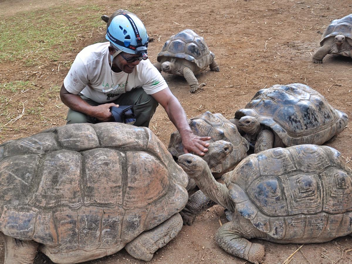 Rencontre avec les tortues à Rodrigues