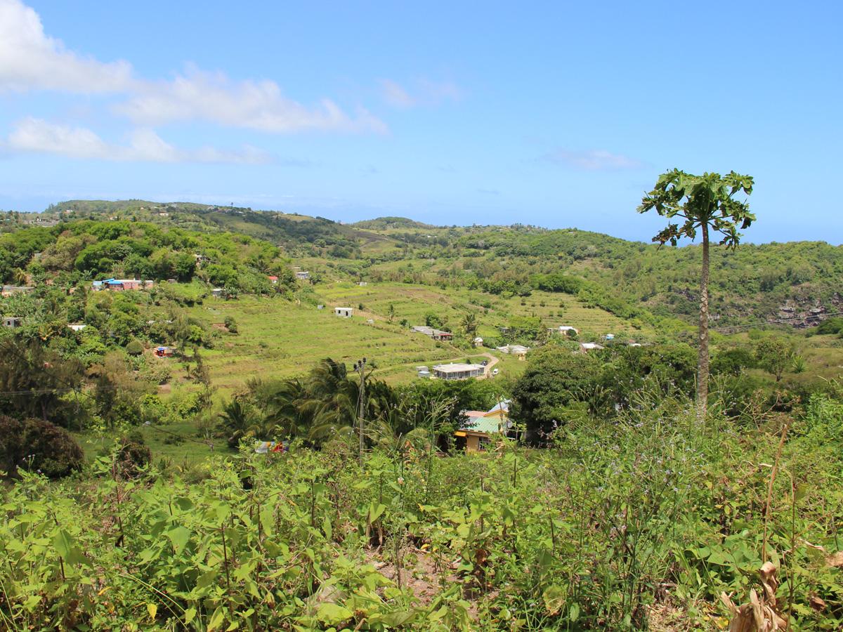 Paysages verdoyants sur l'île sauvage