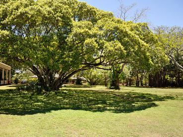 Le jardin verdoyant de La Demeure Saint Antoine à Goodlands